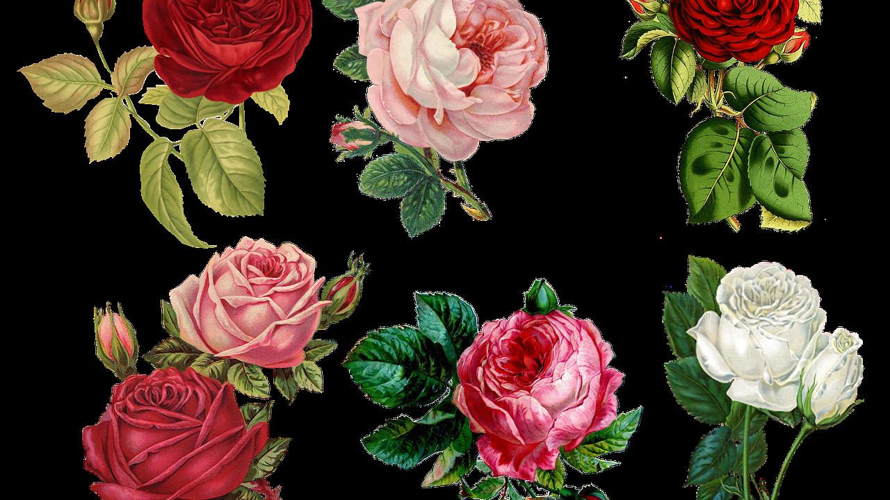 roses-g3b7f67f2b_1280