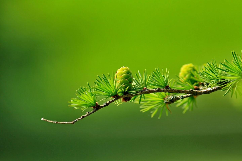 green-tree-plant-leaves-40896